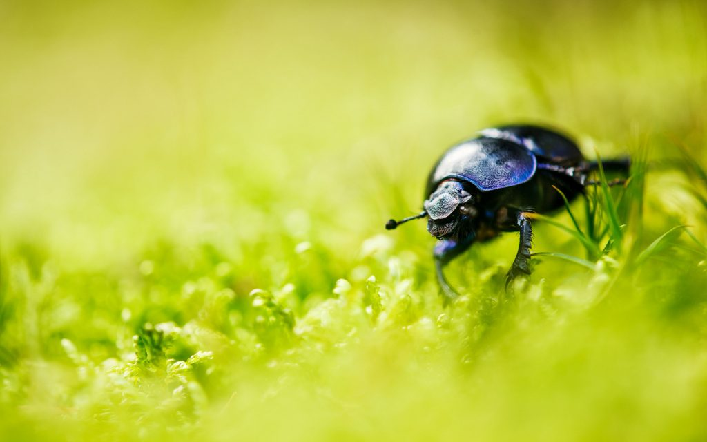 Beetle Widescreen Background