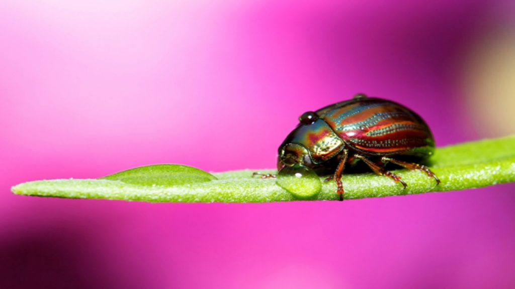 Beetle Full HD Background