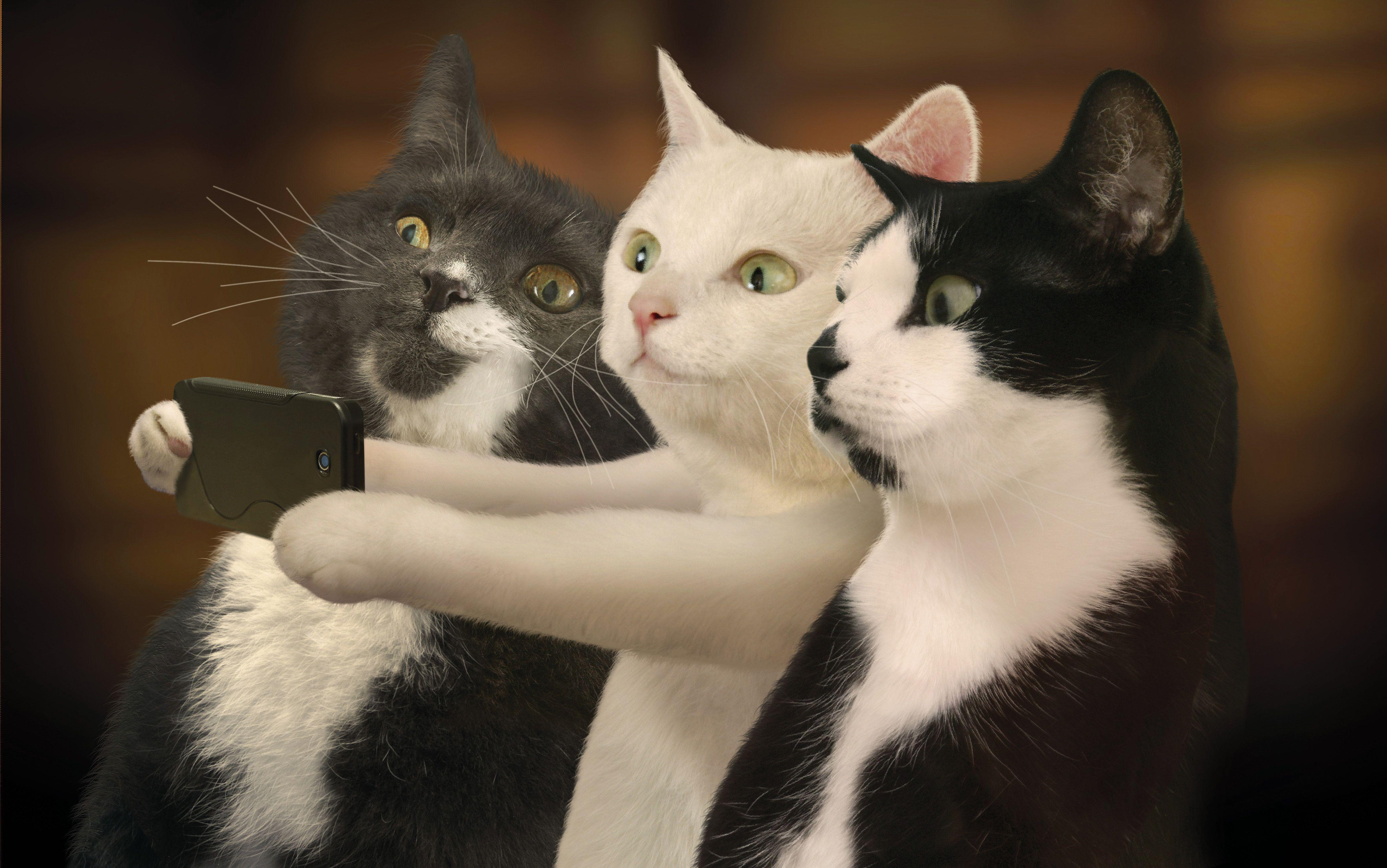 cat-11.jpg