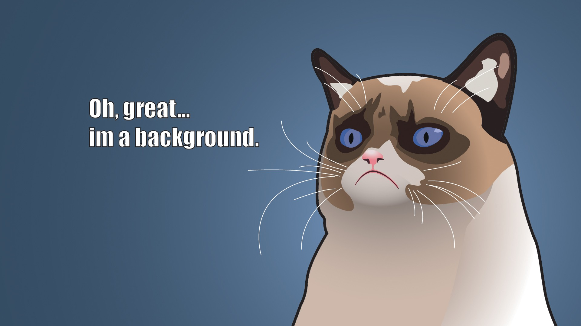 100 and cats backgrounds wallpaper high quality