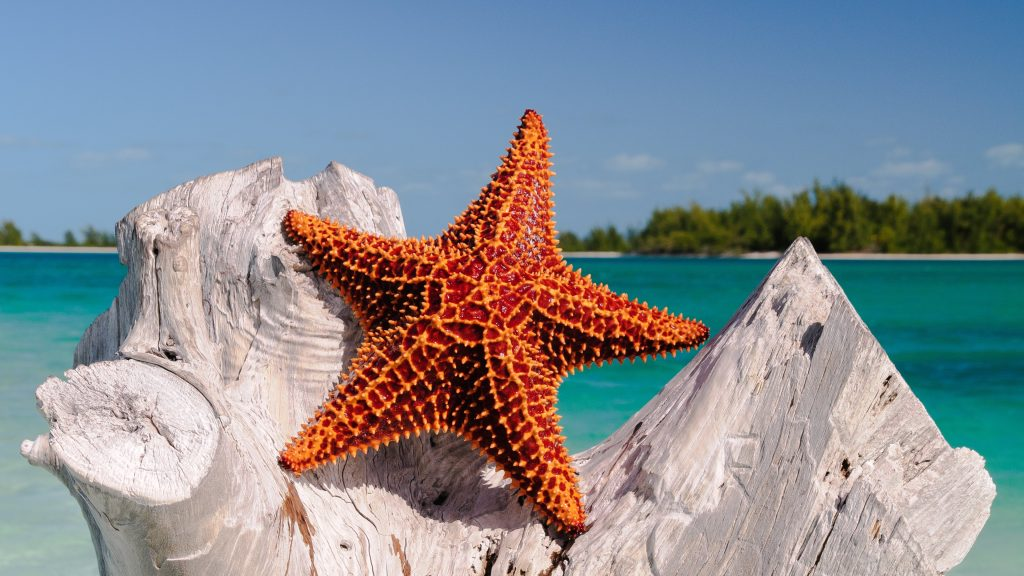 Starfish 4K UHD Wallpaper