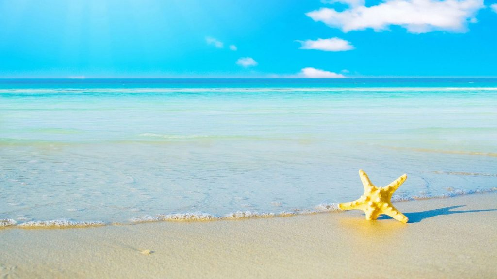 Starfish Full HD Wallpaper