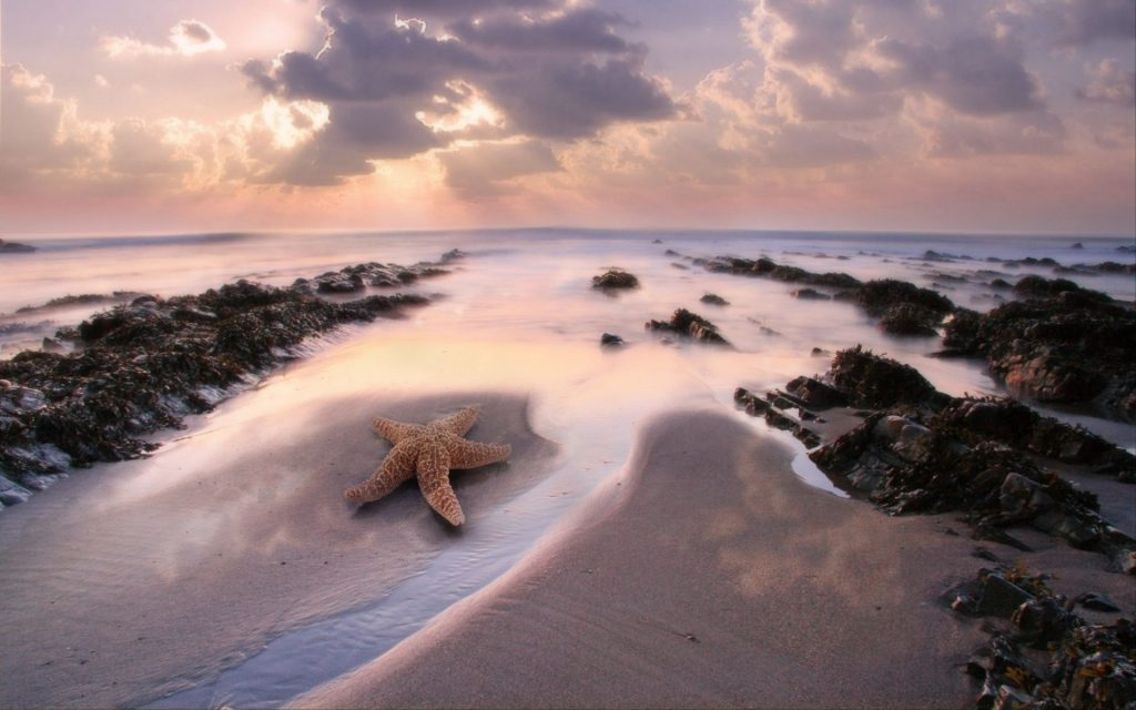 Starfish Widescreen Wallpaper