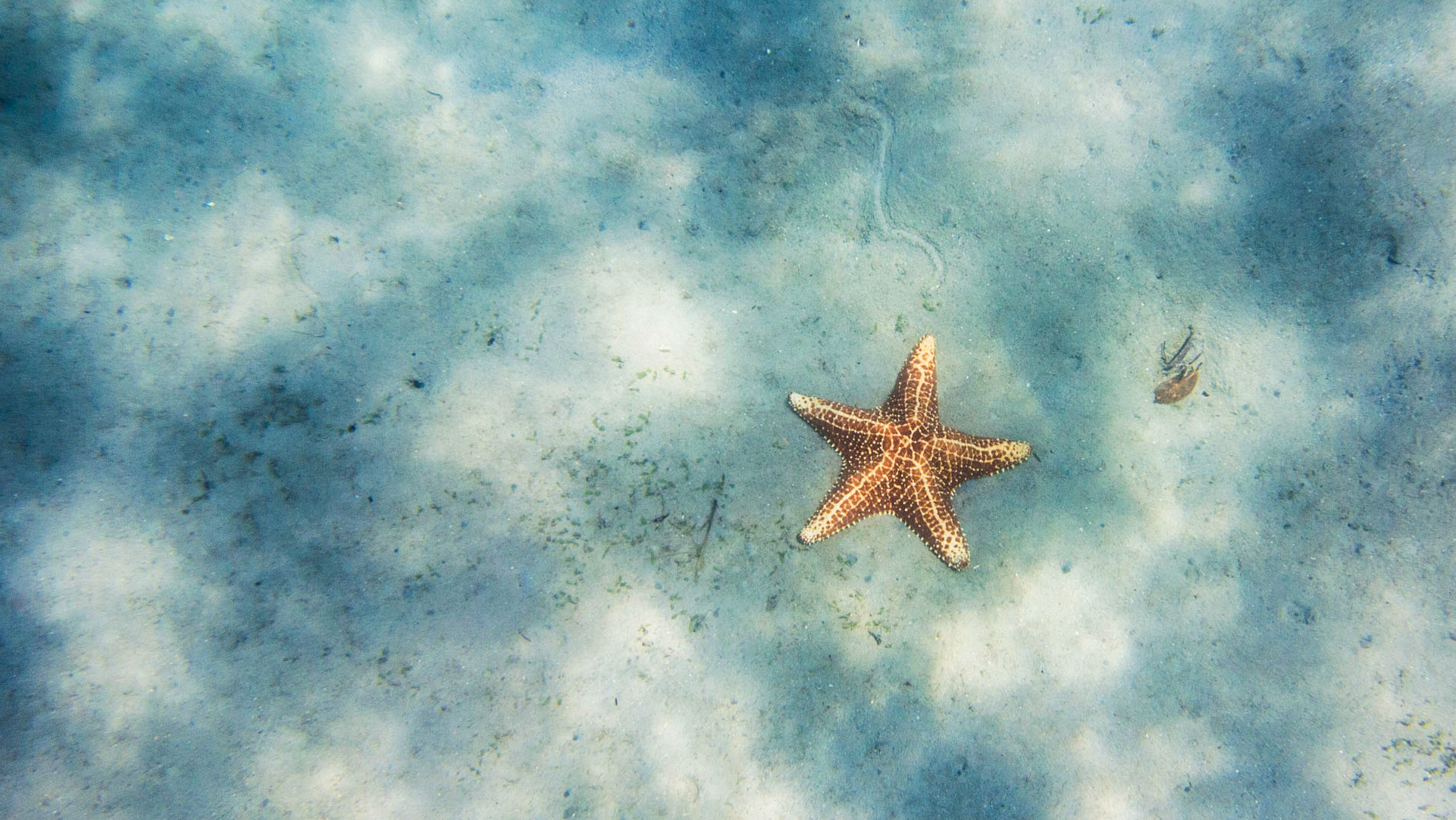 Starfish Wallpapers Pictures Images