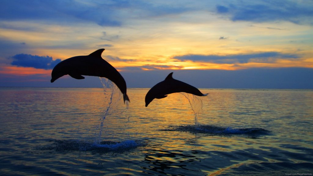Dolphin Full HD Wallpaper