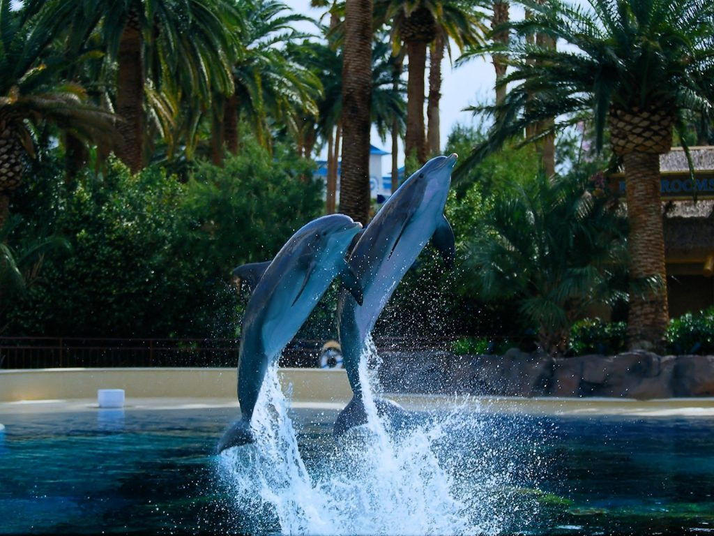 Dolphin wallpapers pictures images - Wallpaper stills ...