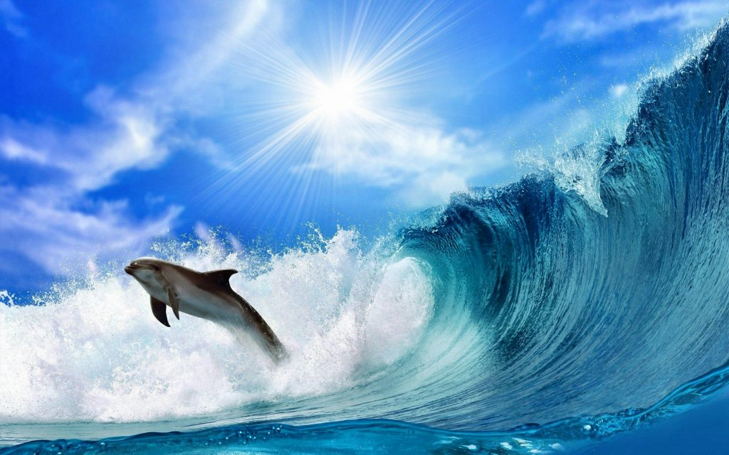 Dolphin Widescreen Wallpaper